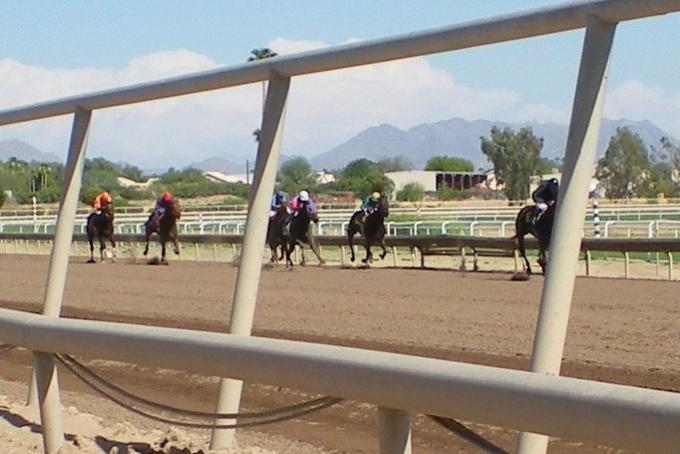 The horses coming toward the finish line