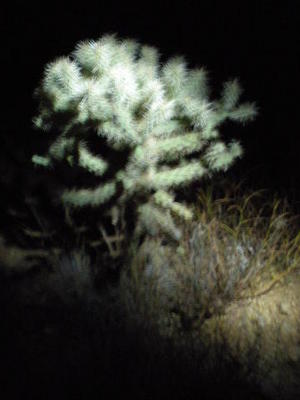 We dodge the cholla by flashlight on our full moon hike to Spur Cross
