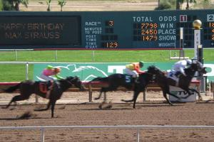 Horses race over the finish line at Turf Paradise Racetrack