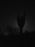 The moonlight outlines a saguaro on Spur Cross Trail