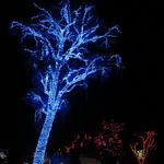A lighted tree an Zoolights